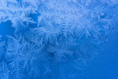 Blått fryst tracery Royaltyfri Fotografi