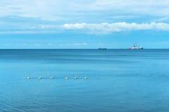 Blått hav och blå himmel, en flock av svanar i havet arkivfoto