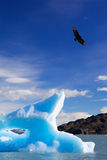blått isberg Arkivfoton