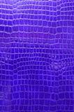 blått krokodilläder Arkivbild