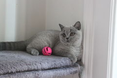 Blått lag för liten kattunge Arkivbilder