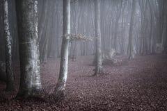 Blått ljus i dimman av skogen Arkivfoton