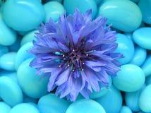 blått lyckligt Royaltyfria Bilder