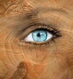 Blått mänskligt öga med wood textur - åldras begrepp arkivbilder