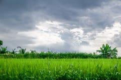 Blått moln, färg Arkivbilder
