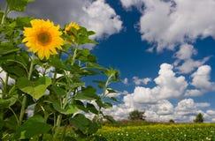 blått molnigt över skysolrosen Arkivbilder