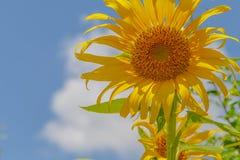 blått molnigt fält över skysolrosen Fotografering för Bildbyråer