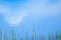 Blått och gräsplan Arkivbild