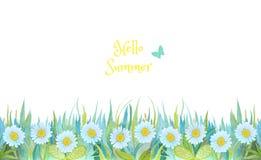 Blått och grönt gräs med ljusa blommor Kamomillar som isoleras p? vit bakgrund vektor illustrationer