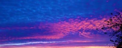 Blått och purpurfärgat, himmel och träd frihet och evighet arkivbilder