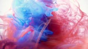 Blått och rött färgpulver som tillsammans blandar över en ren vit bakgrund Fantastisk textur som ska förläggas i dina projekt som