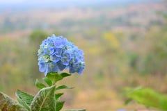 Blått på kullen Arkivfoto