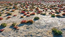 Blått rött gräs arkivbilder