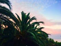 Blått-rosa färger Arkivfoton