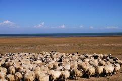 Blått ser med sheeps Arkivfoto