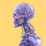 Blått skelett på bakgrund för gyckelgulingstudio Diagram design som är modern Arkivfoton
