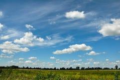 Blått skidar och gräs Royaltyfri Fotografi