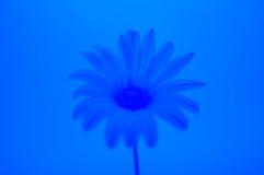 blått tema Royaltyfria Bilder