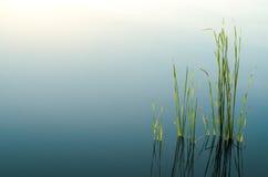 Blått tonad gradated abstrakt bakgrund Royaltyfria Bilder