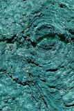 Blått trädskäll royaltyfri foto