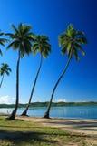 blått tropiskt royaltyfria bilder