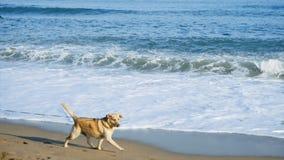Blått tropiskt hav med den gula sandiga stranden materiel sätta på land hunden Den sandiga stranden med havet vinkar på en solig  Arkivfoto