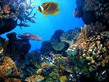 blått vatten för akvarium Arkivfoto