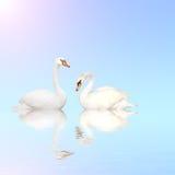 blått vatten för stum swan royaltyfri bild