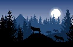 Blått vektorlandskap med en packe av varger i tät skog med royaltyfri illustrationer