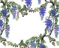 Blått wisteriaträd Royaltyfri Foto