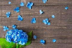 Blåttblommor av vanliga hortensian med kopieringsutrymme Royaltyfri Fotografi