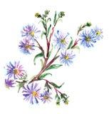 Blåttblommor, vattenfärg Arkivfoto