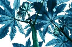Blåttfilialer av växter blommar träd som ser upp på en vit isola Royaltyfri Bild