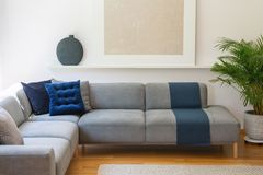 Blåttkuddar på grå färger tränga någon soffan i vardagsruminre med p royaltyfria bilder