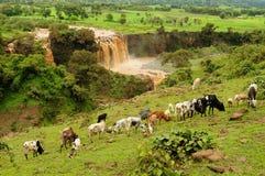 BlåttNile nedgångar i Etiopien Arkivfoto