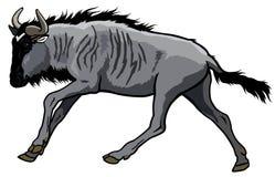 Blåttwildebeest Royaltyfria Bilder