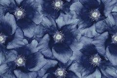 Blåvita blommor för blom- bakgrund blom- collage vita tulpan för blomma för bakgrundssammansättningsconvolvulus closeup Arkivfoto