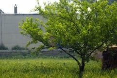 Blé 05 Images libres de droits
