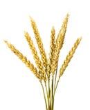 blé Images stock