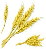blé Photographie stock libre de droits