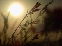 Blé, beau, paysage, nature, usines, photographie stock