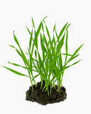 blé croissant au sol de pousses Image libre de droits