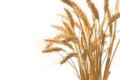 blé d'or Photographie stock libre de droits
