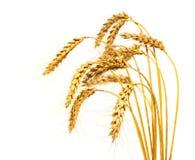 blé d'isolement de cheminées images stock