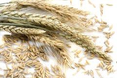 blé d'oreilles Images stock