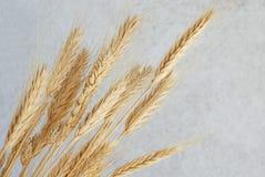 blé d'oreilles photos stock