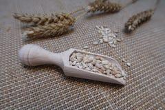 Blé dans un scoop en bois avec des oreilles de blé sur un fond hessois photo libre de droits