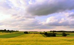 blé de zone Image stock