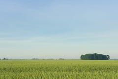 blé de zone Images stock