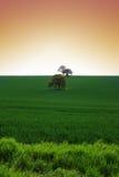 blé de zone Photo libre de droits